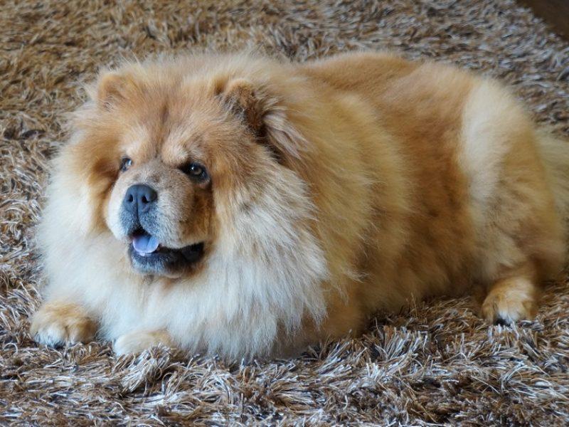 Animais de estimação melhoram a qualidade de vida