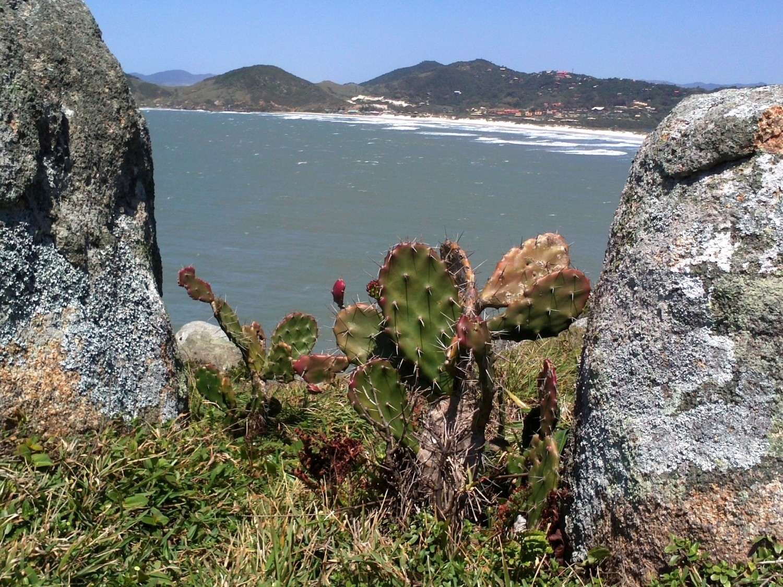 Praia do Rosa: um paraíso em Santa Catarina