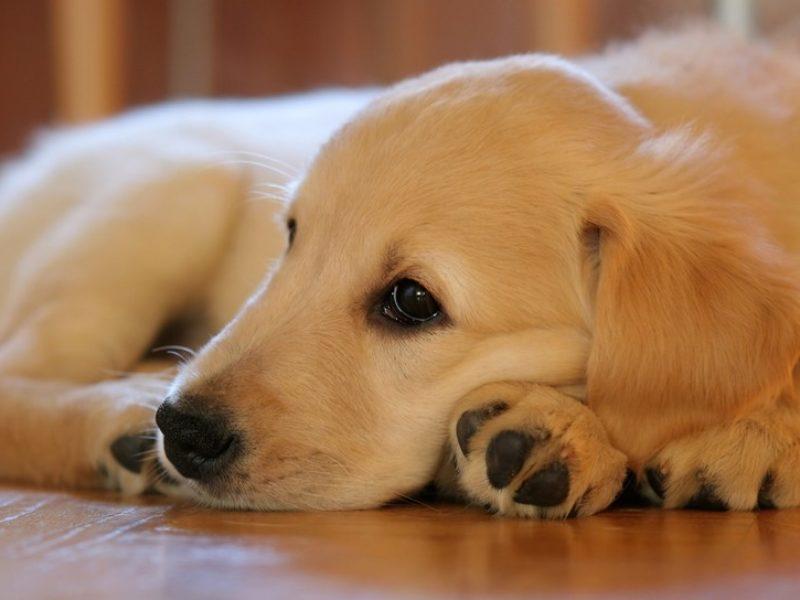 Animais de estimação: castração e prevenção de doenças